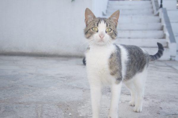 Thasos 2010