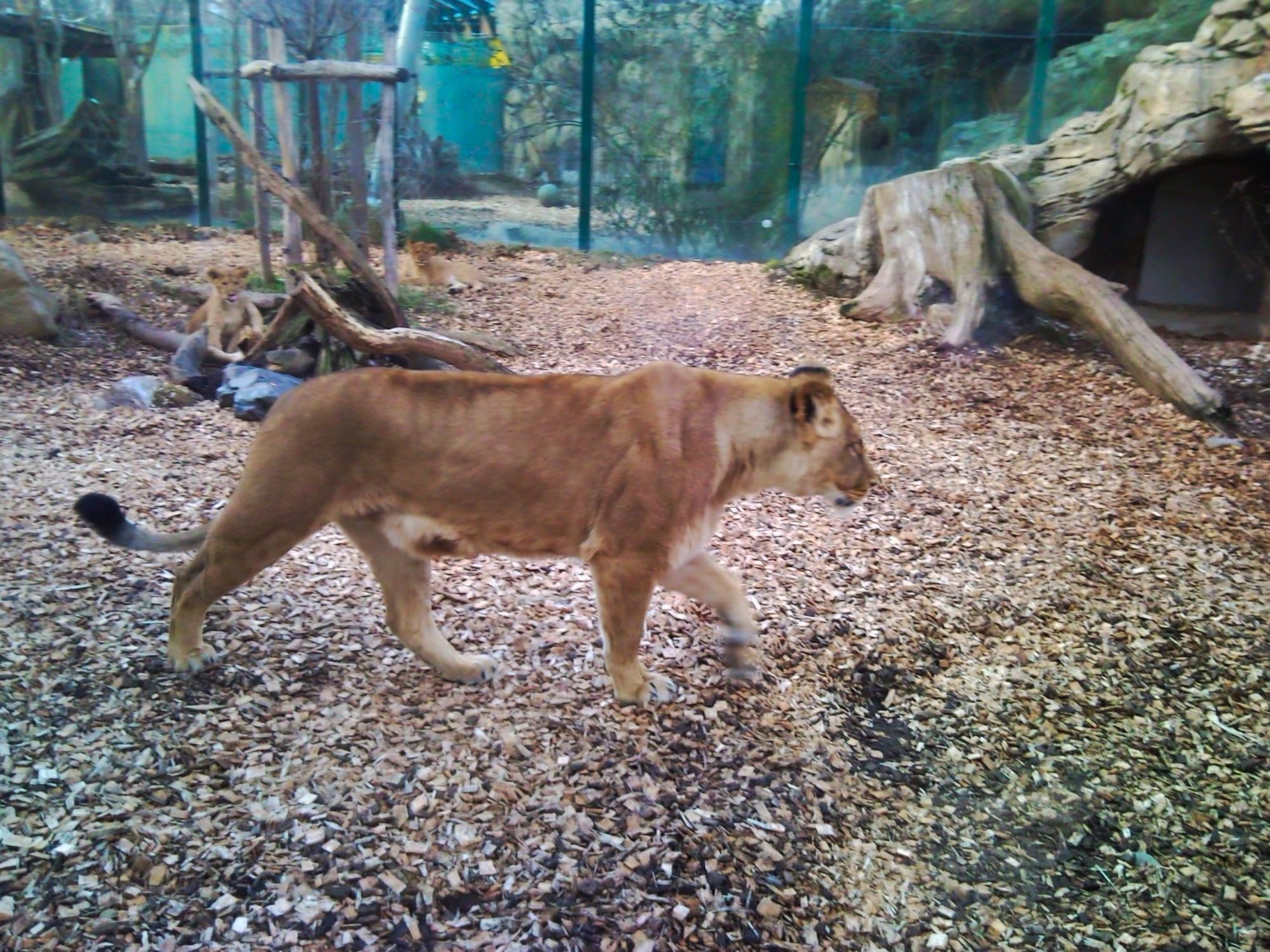 Zoo Schönbrunn