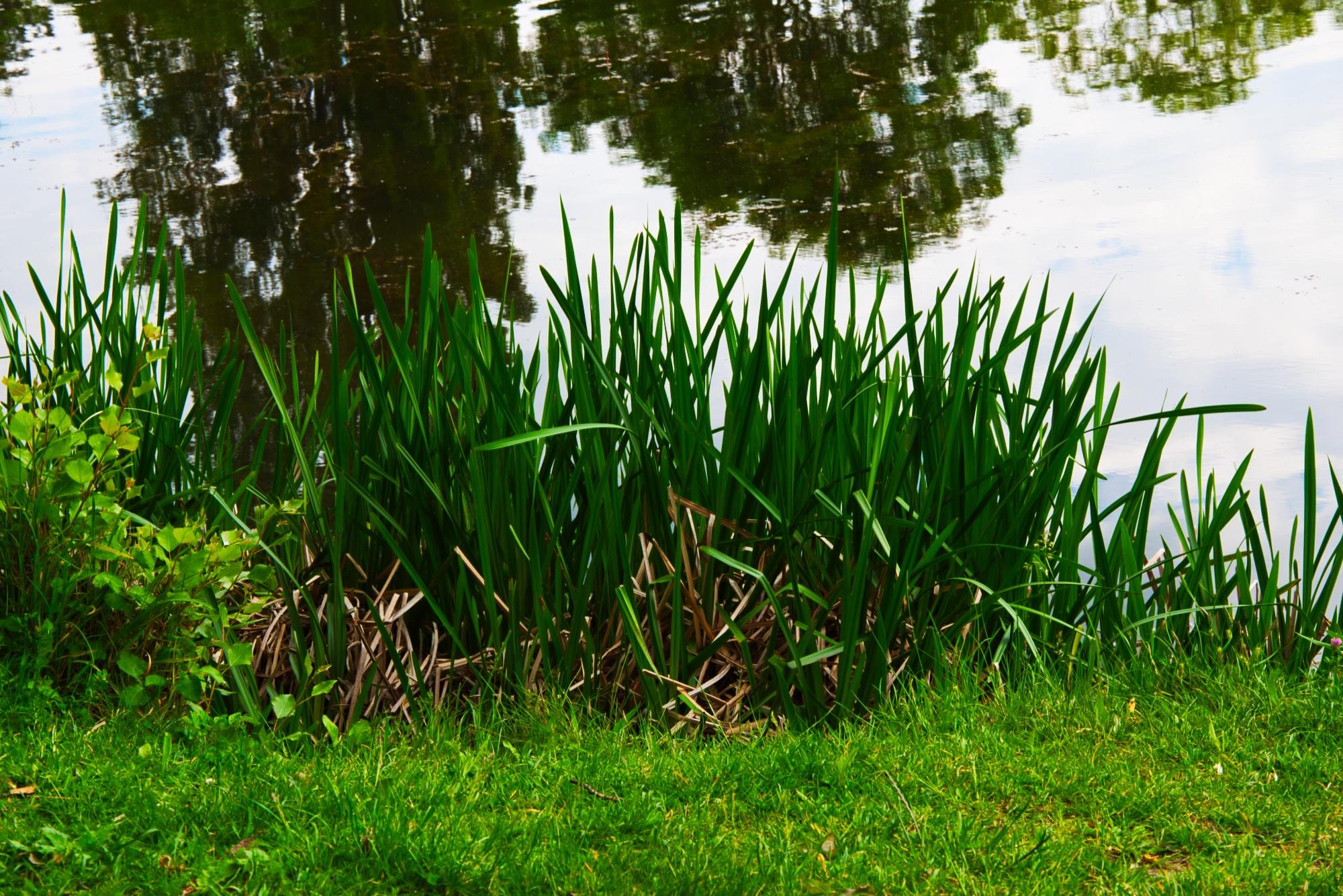 Floridsdorfer Wasserpark